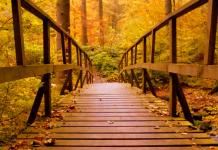 Syysmetsä ja silta